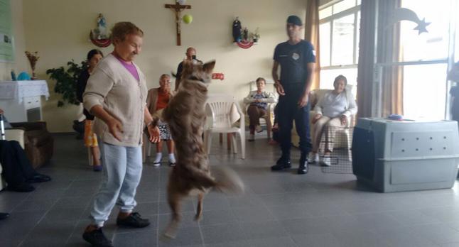 Além da segurança, cães fazem apresentação em escolas e instituições filantrópicas